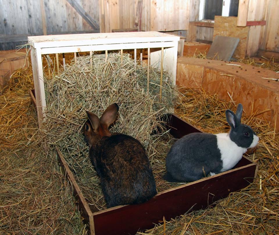 Amos och Helga visar en bra kaninkost   Foto: Katarina Vallbo