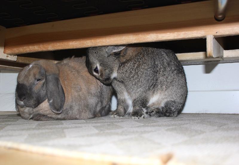 Under sofaen er det lov å gnage. Sånn må man jo regne med når man har bjelker i heltre under sofaen. Det er imidlertid et veldig populært oppholdsrom med god takhøyde.