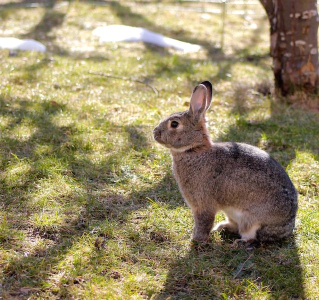 Mandel ble reddet og lever i dag med sine tre kaninvenner hos oss.  Foto: Marit Emilie Buseth