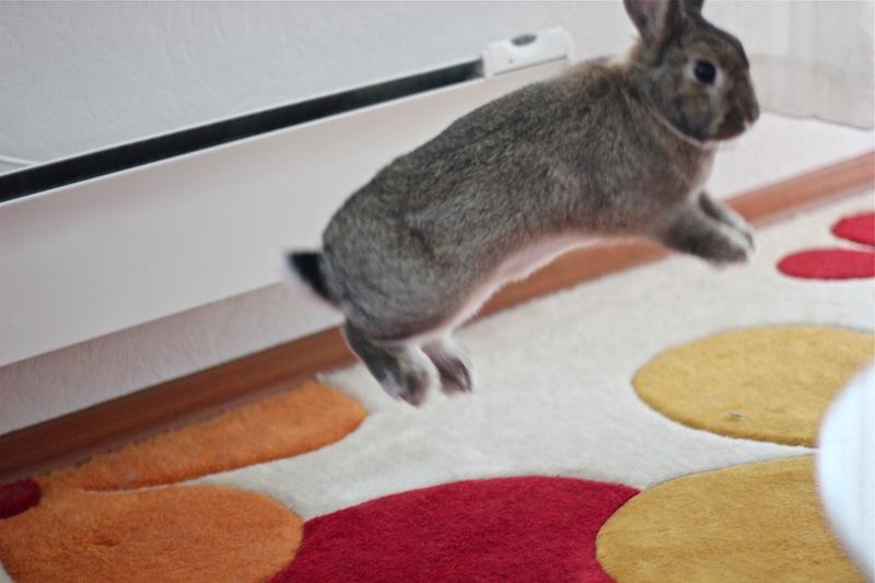 En glad kanin som spretter omkring når jeg er på besøk.