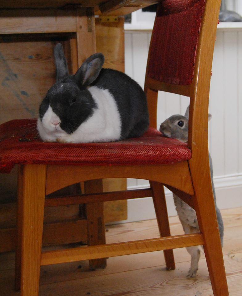 Hei, hvordan har du det der oppe? Helga og Dinka.  Foto: Katarina Vallbo