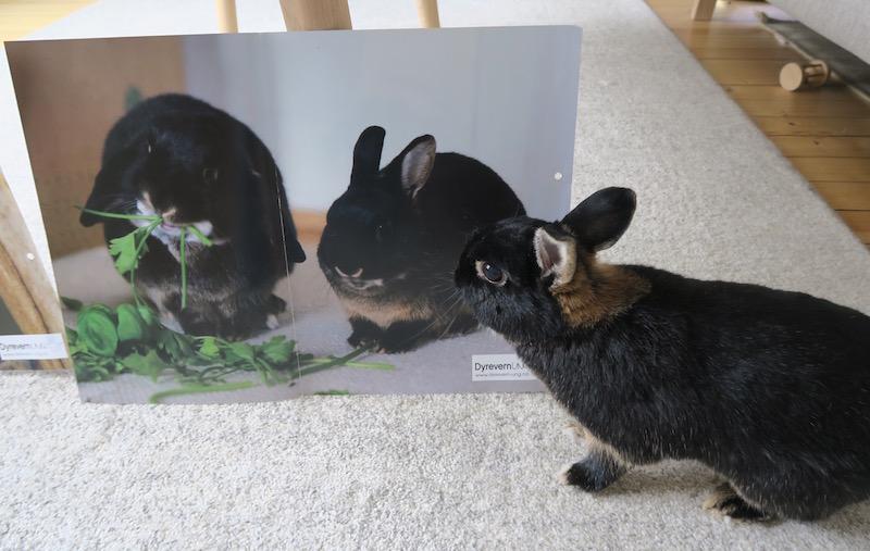 Dyrevern ung, dyrevern+barnehage, kaniner+barnehage