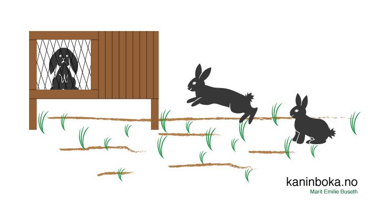 Tegneserie kanin kjønn