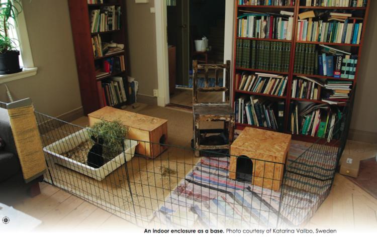 Man kan også bruke gjerdene til å lage enkle begrensninger innendørs. Her fra boka mi  Rabbit Behaviour, Health and Care.