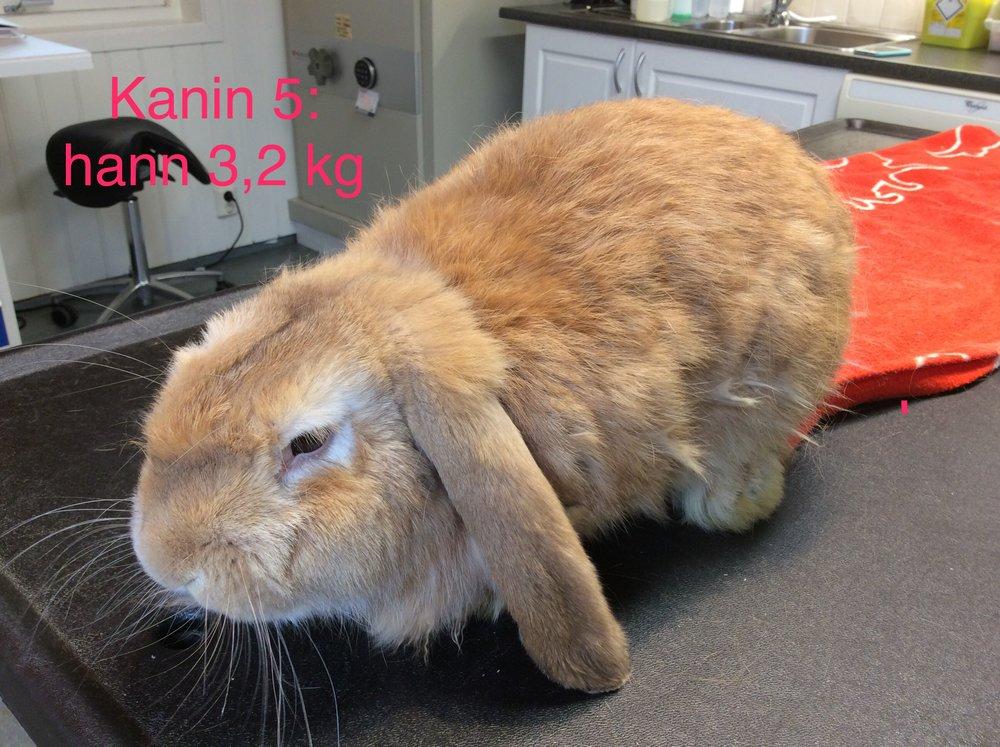 Bastian Bergen 3.2 kg Hannkanin