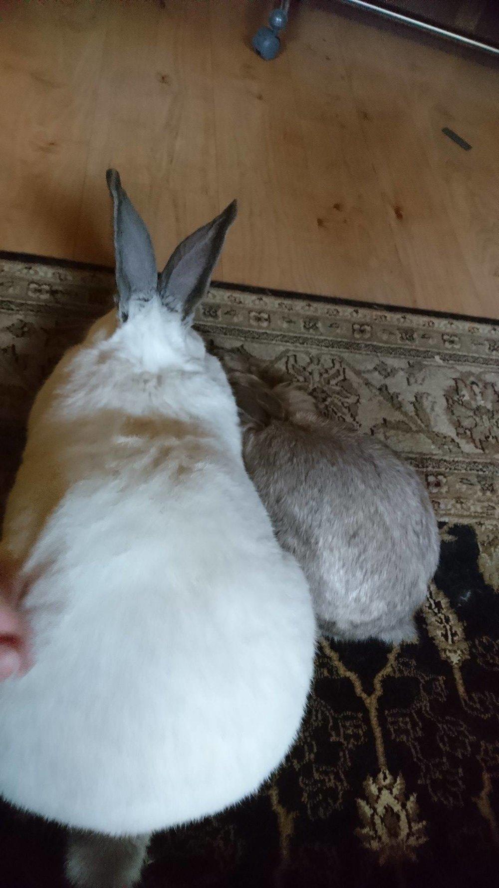 Stor og liten. To gode venner