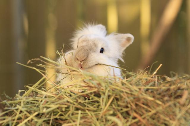 Hva skal kaninen spise? -