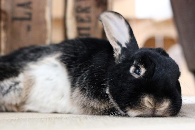 Kaninen min er sint - Hva skal jeg gjøre?