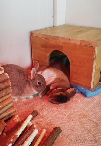 Perle og Mio koser seg inne i varmen  Foto: Gunnhild Gjessing Bay