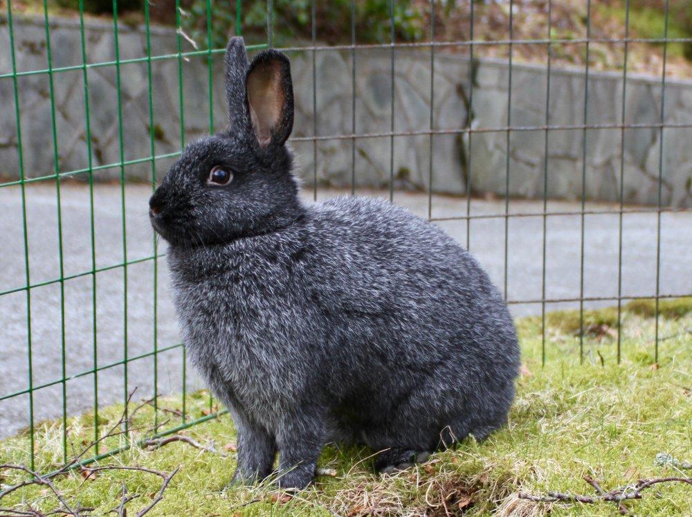 Omplassering+kanin+bergen.jpg