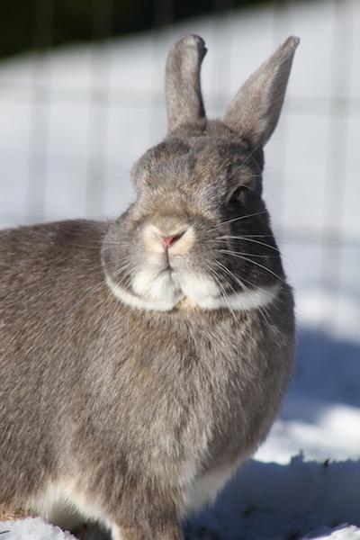 bergen+omplassering+kanin.JPG
