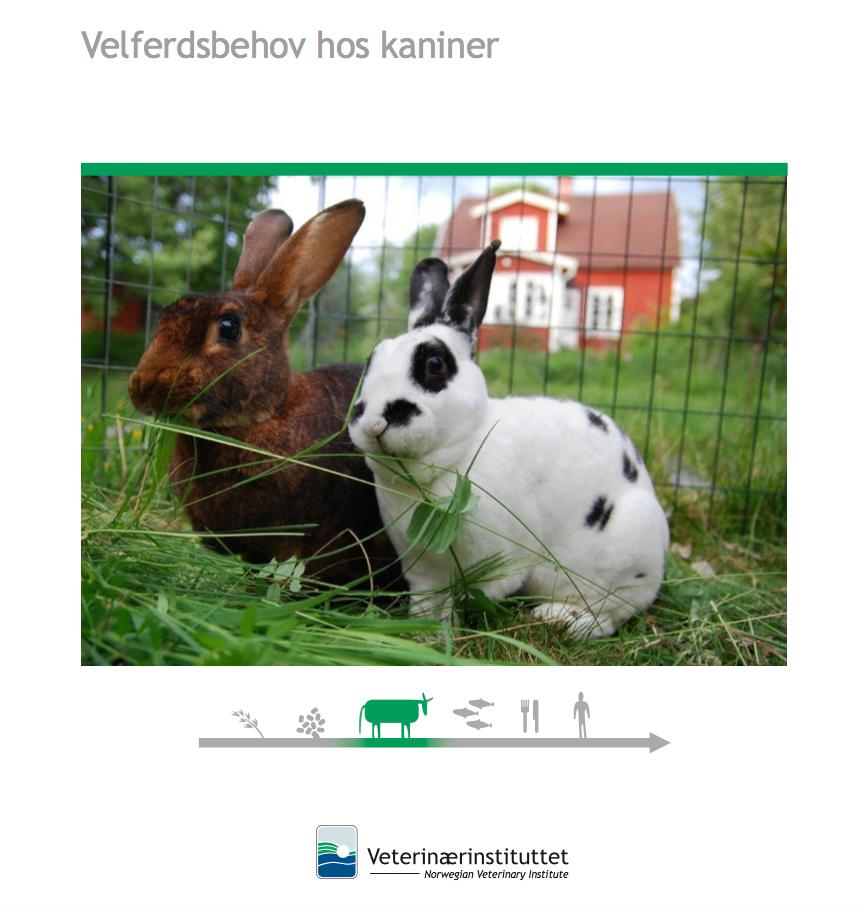 velferdsrapport om kanin