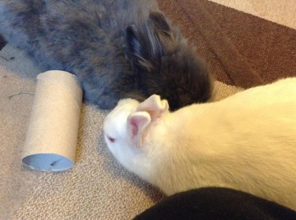 Ronja savner Birk og gleder seg til å få en ny kompis