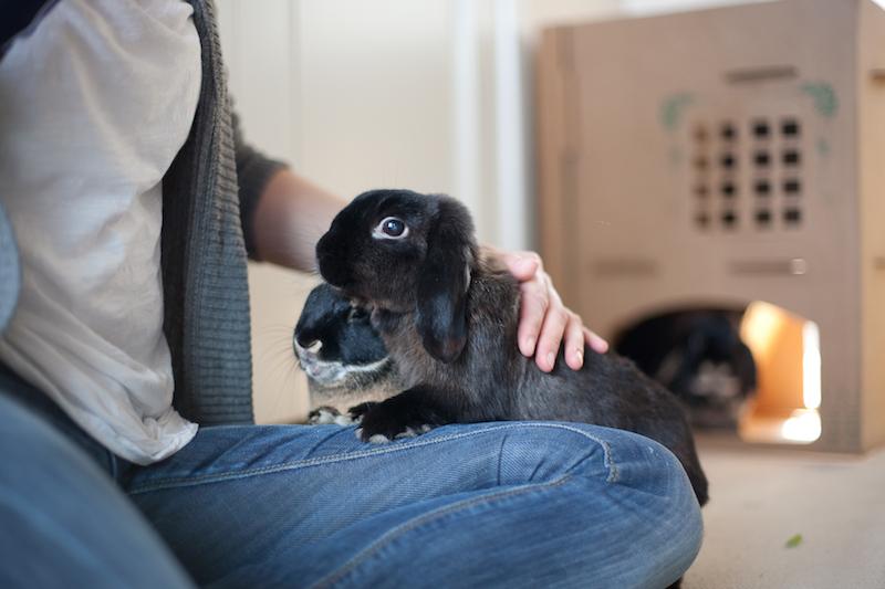 Nærhet til alle kaninene