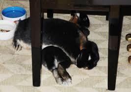 Harald kunne også sove på Melis