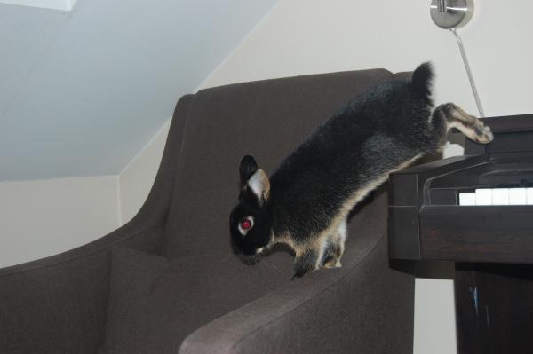 Petters favorittsted å ha siesta var på pianoet, så både Harald og Melis lærte seg raskt å besøke ham der oppe.