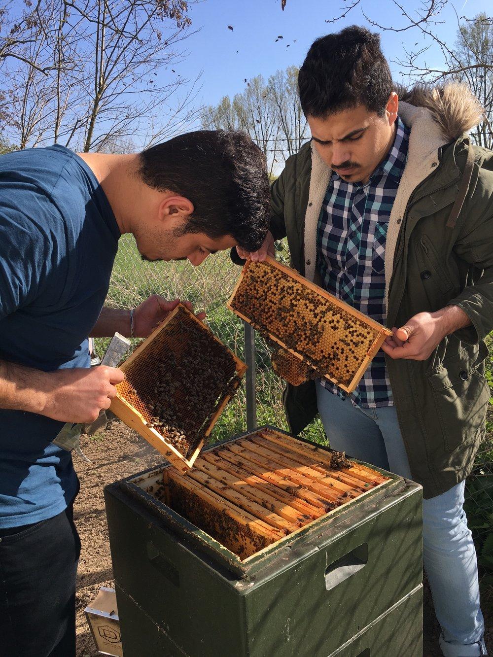 Geflüchtete werden selbst als ehrenamtliche Bienenlehrer ausgebildet...