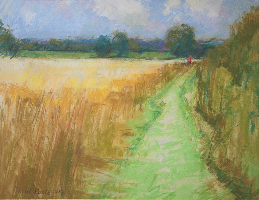 Path Through Cornfield