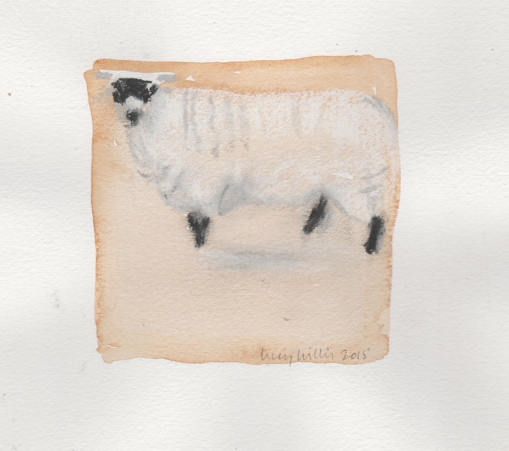 Masked Sheep