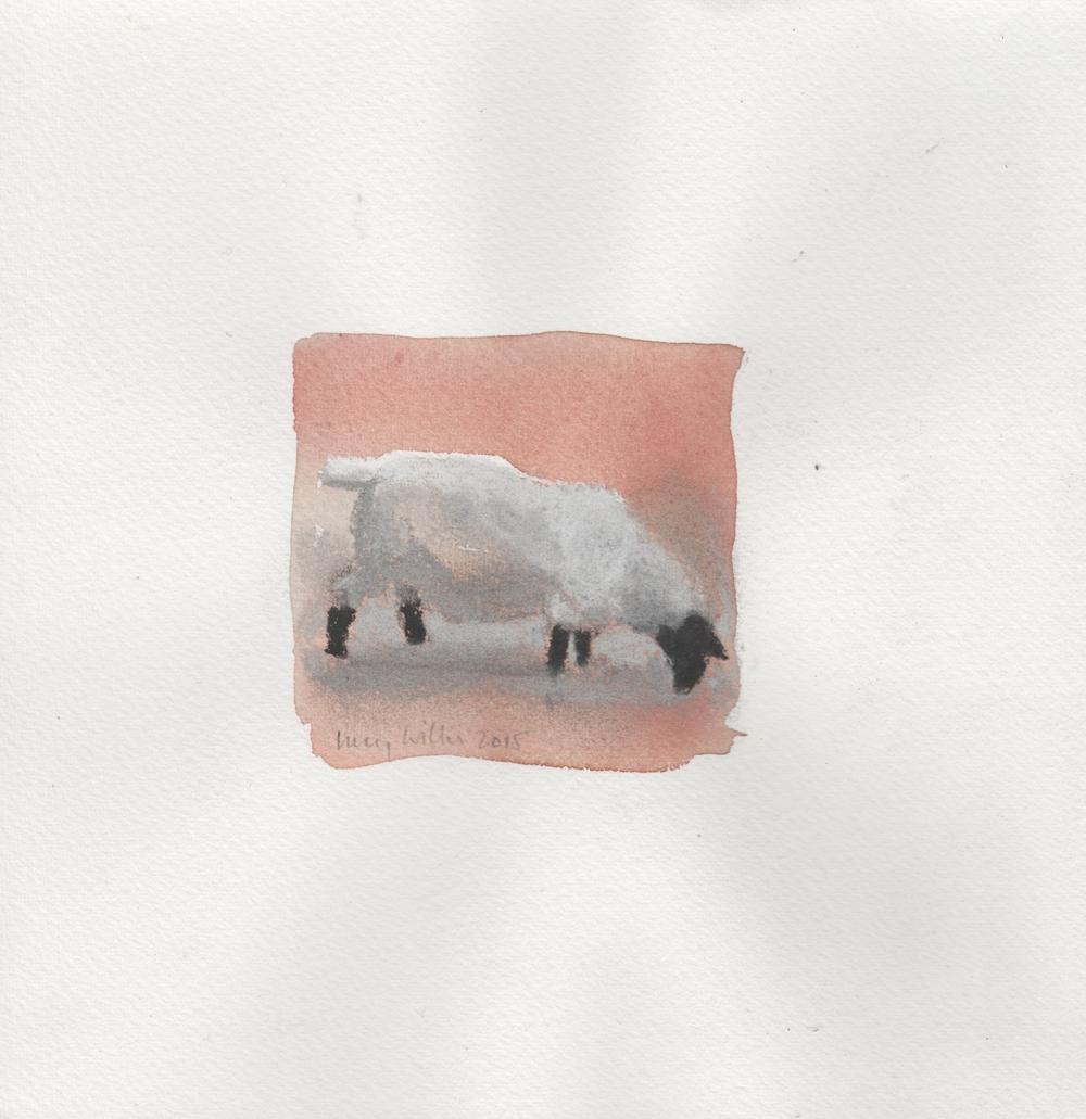 Ram in a Pink Field