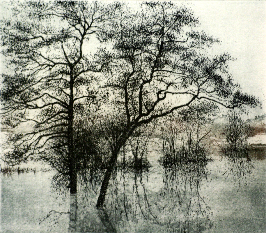 The Forest in Flood