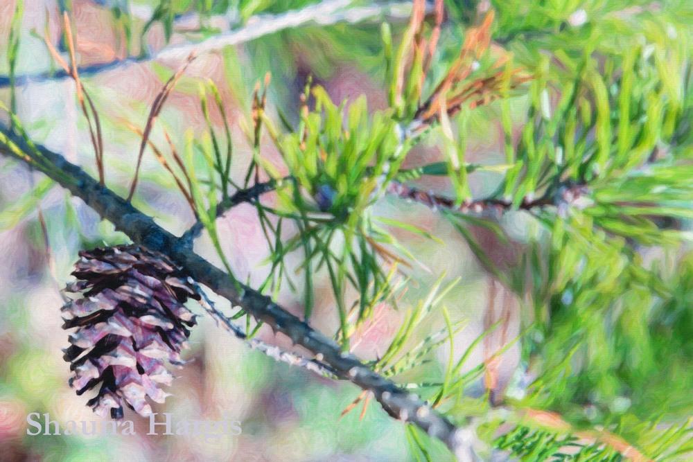 painted-pine-cone.jpg