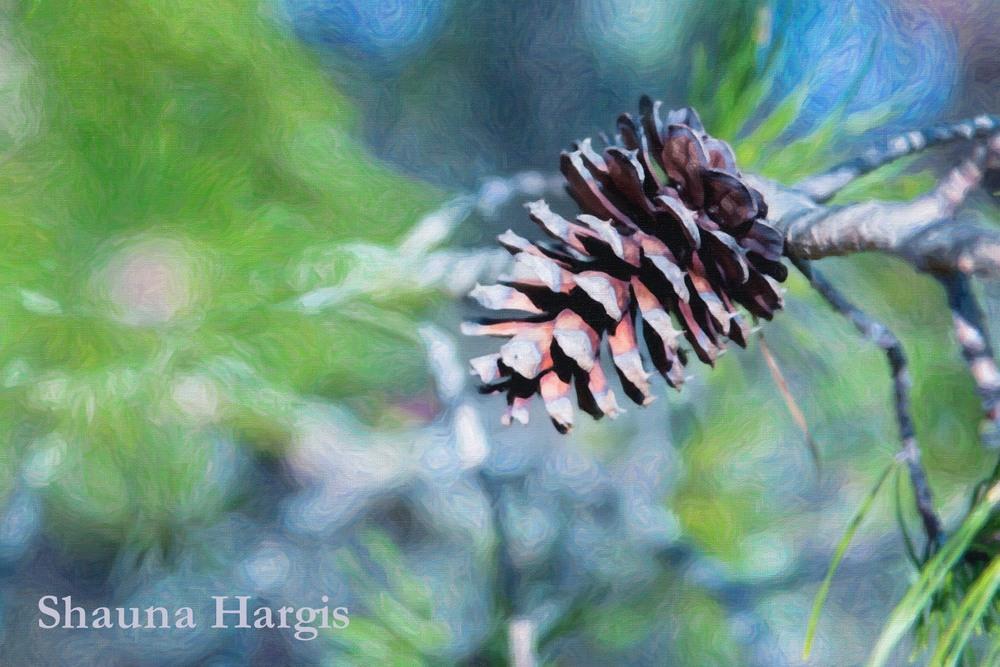 single-pine-cone.jpg