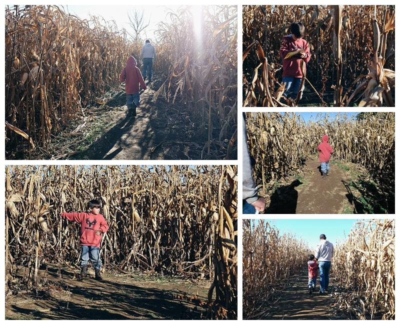 Shauna Hargis Photography - Crossville TN - Corn maze - Fall Fun