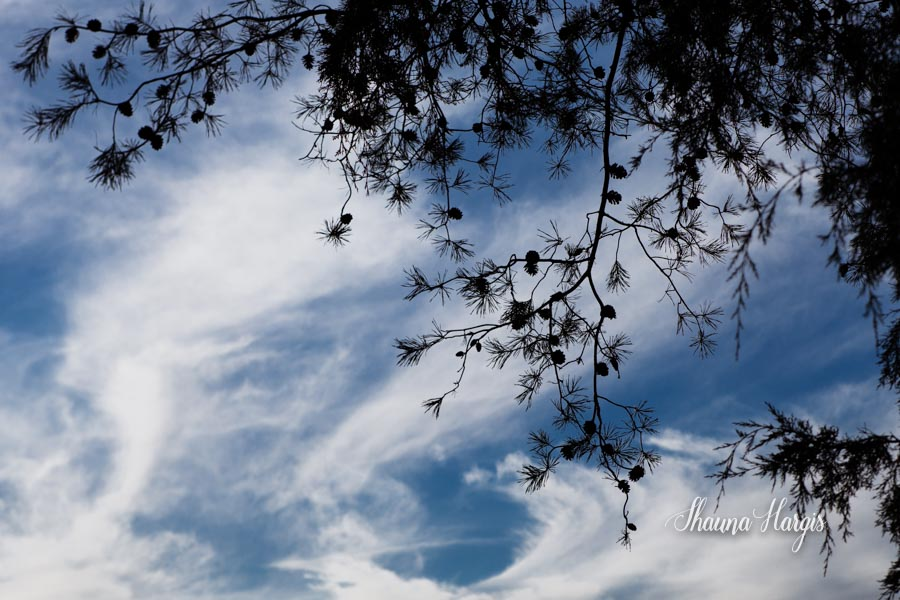 Shauna Hargis Photography - Lensbaby Edge 80 - Nature Photography