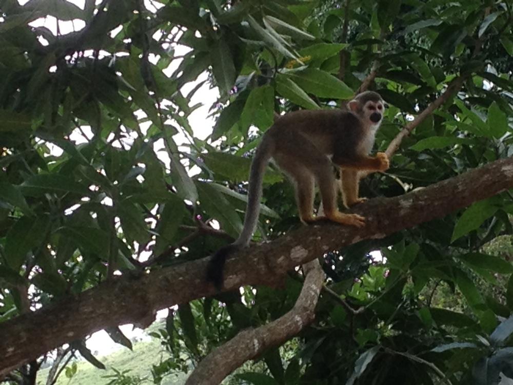 monkeyland reserve