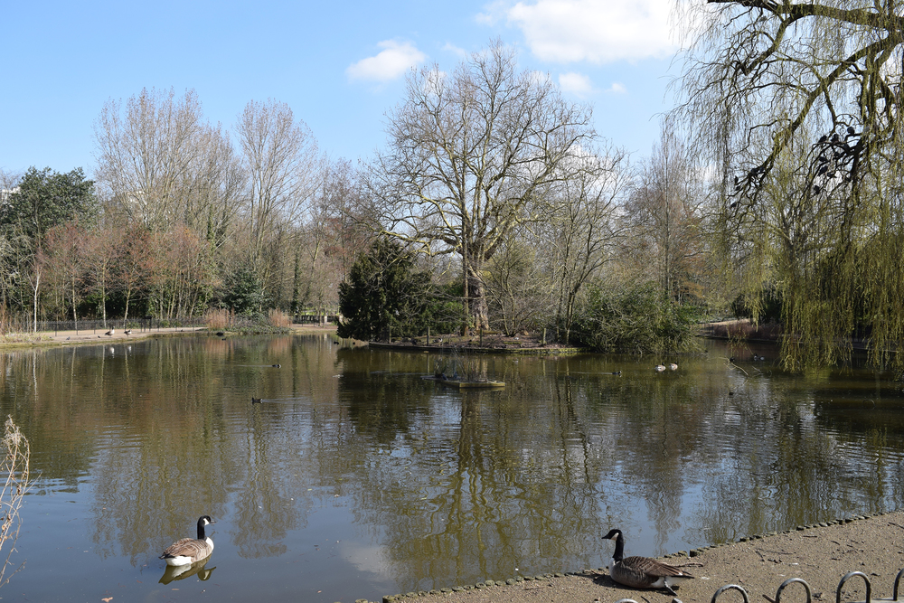 A relatively large lake and six ponds are to be found within the ornamental areas of the Park. Four of the ponds are situated in a 'landscaped valley' and are linked by a stream. The lake lies towards the east, with a central island planted with shrubs and trees, supporting a large population of water fowl.