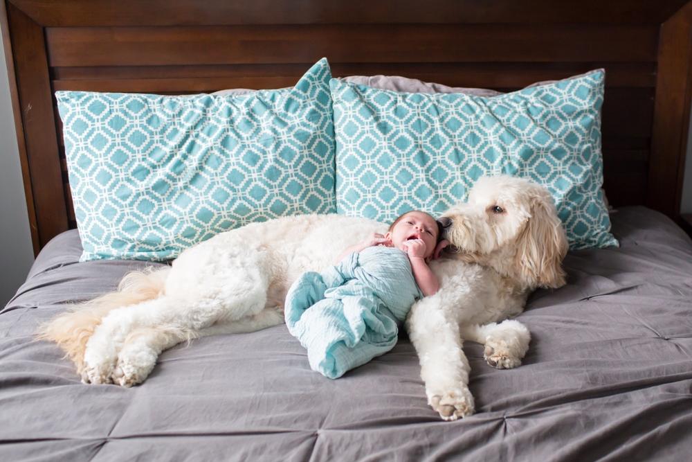 Rineer Newborn 2015-99_anna grace photography maryland newborn photographer baltimore.jpg