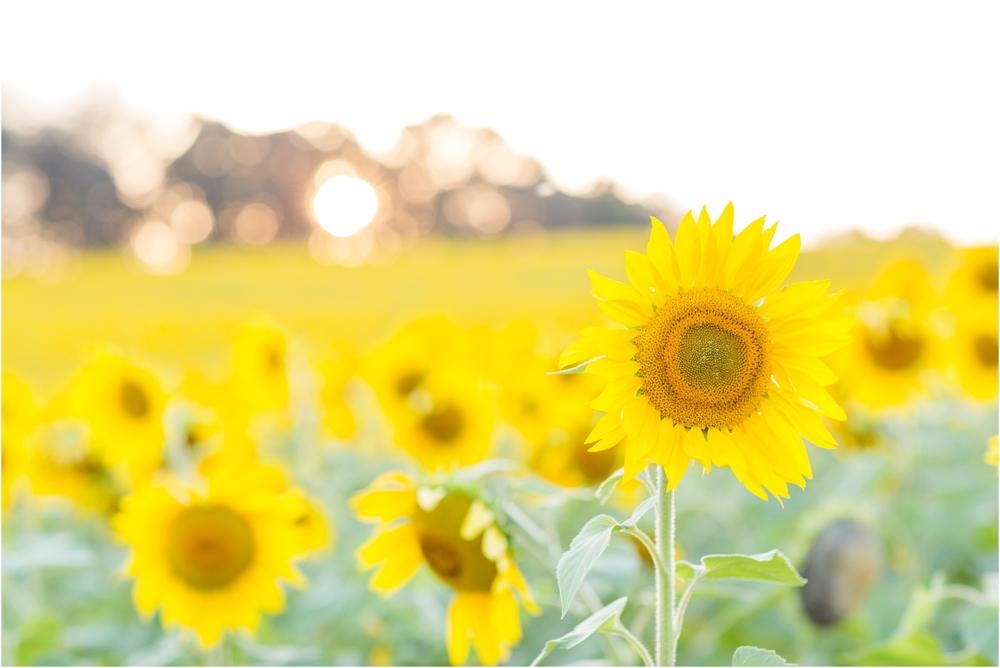 Jenny-Nick-Sunflowers-162.jpg