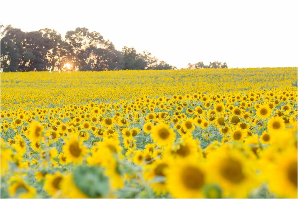 Jenny-Nick-Sunflowers-163.jpg