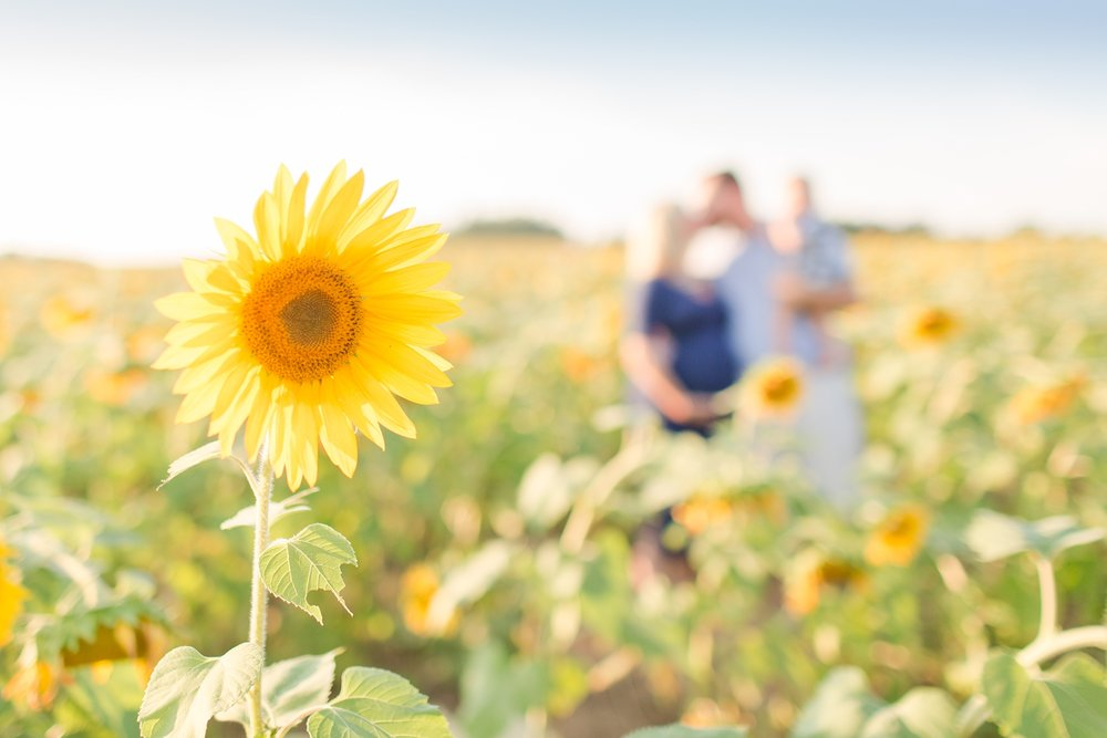 Andrews Family 2016-134_anna grace photography baltimore maryland maternity family photographer sunflower field photo.jpg