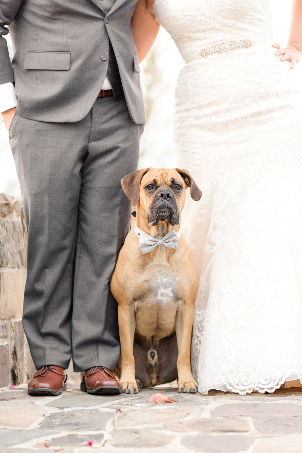 Dexter came to the wedding for a few pictures and it was amazing!!