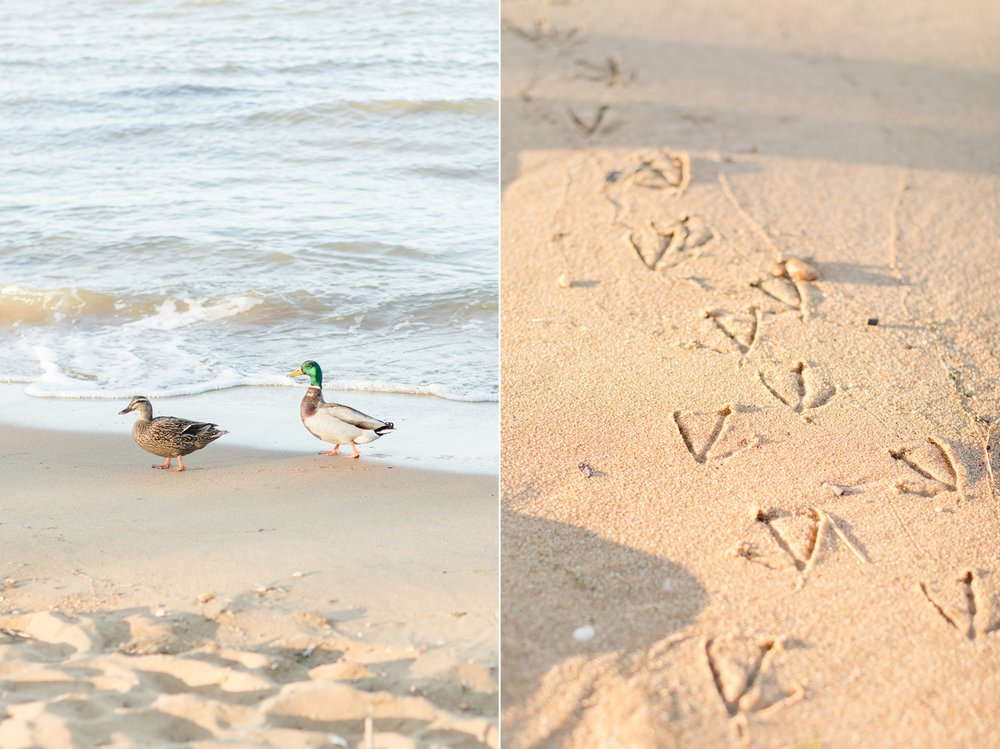 These sweet little ducks were following us around during the entire shoot! So cute.