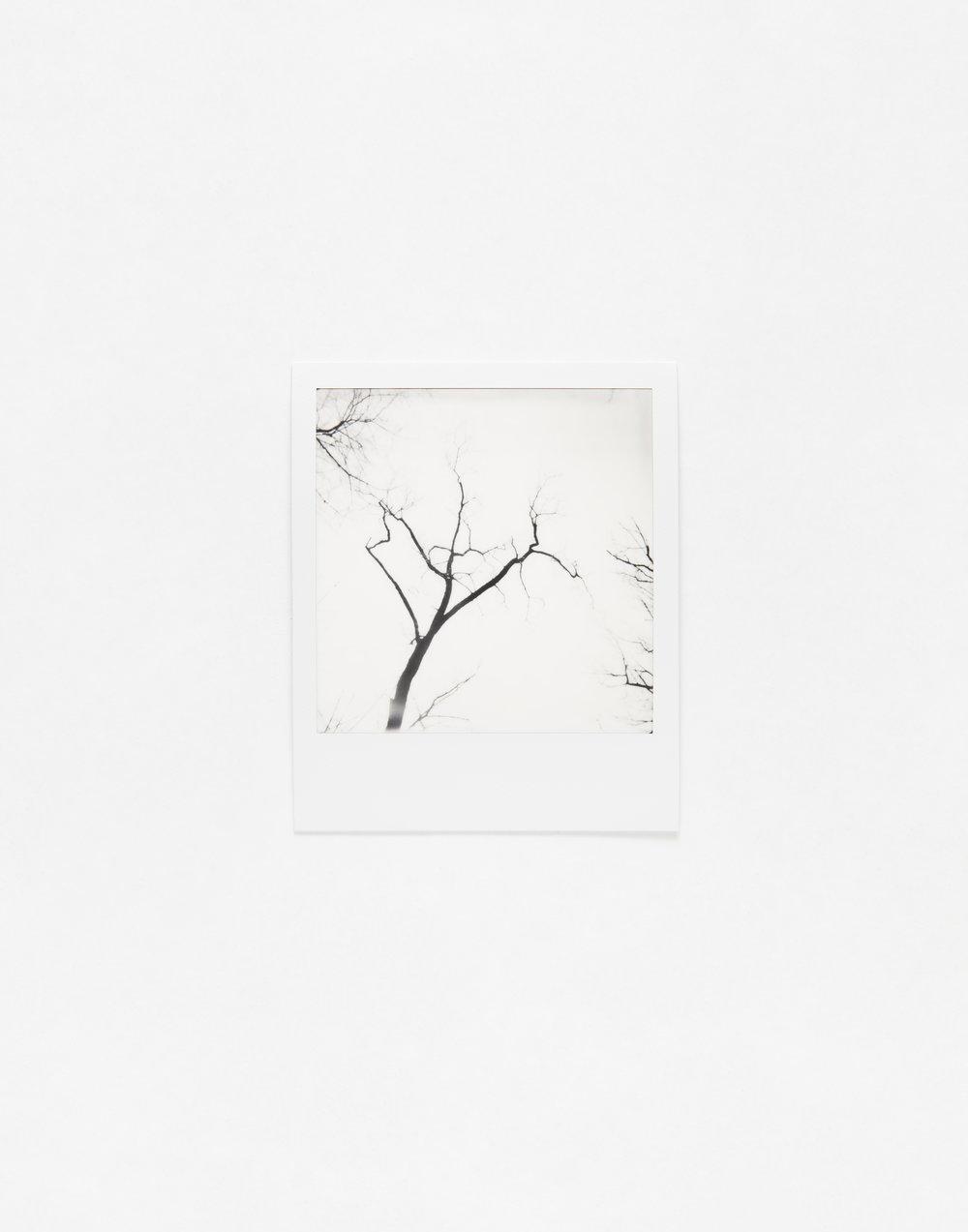 180331_Polaroid_0025.jpg