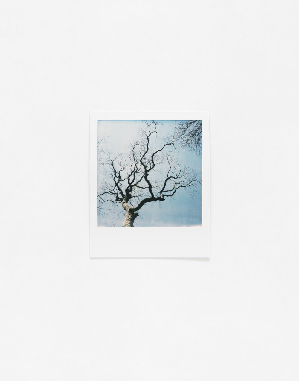 180331_Polaroid_0014.jpg