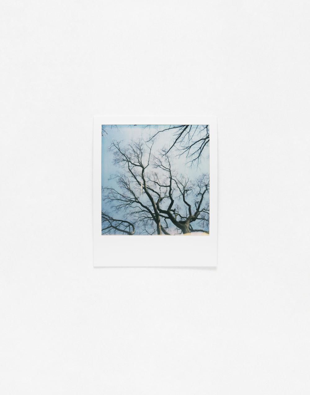 180331_Polaroid_0020.jpg
