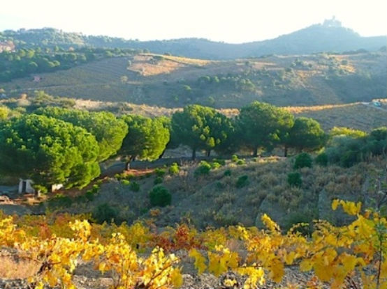 223201013419119_Autumn Collioure Hills.jpg