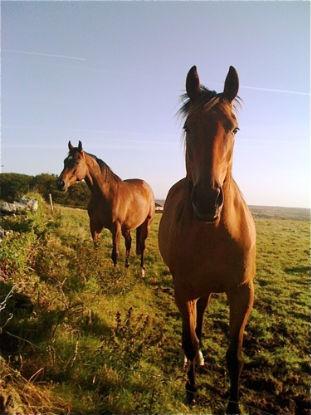 26320101418971_Horses.jpg