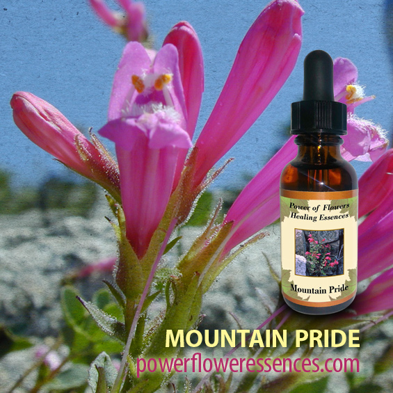 Mountain Pride Flower Essence -assists those who wish to define their purpose in life. This essence is for those who strive and persevere with fortitude and an earnest heart.