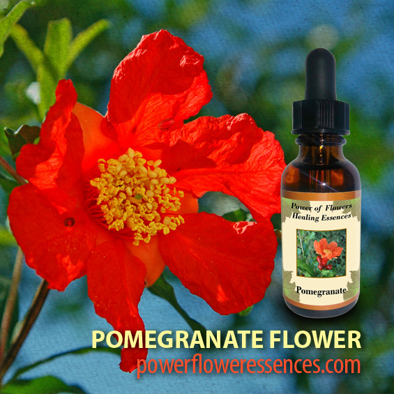 Pomegranate Flower Essence -restores self-nurturing and regenerates fertility on all levels.