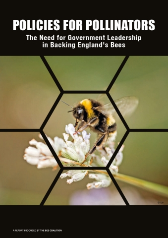 bee-coalition-report-cover.jpg