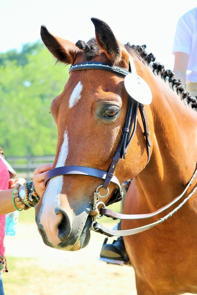 show pony.jpg