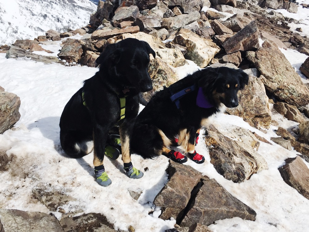 our sweet pups in their ruffwear boots