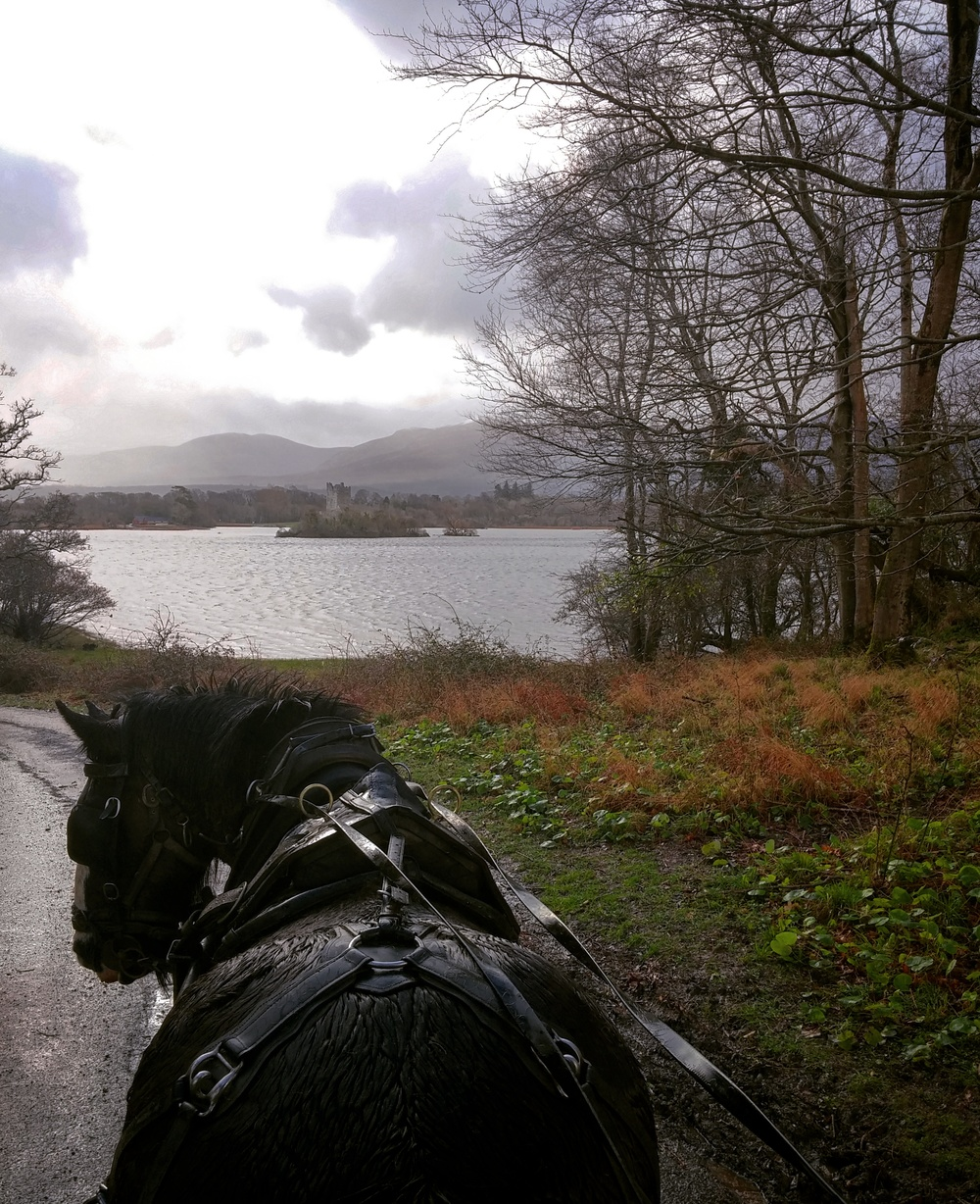 On our first morning in Ireland, Delilah the mare took us on a jaunty cart tour around the lake.