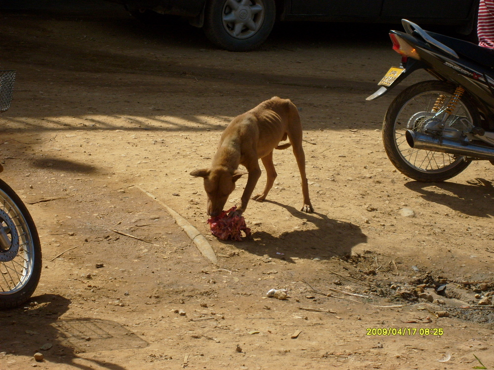 Stray dogs could be seen in every direction. They wait for people to throw them fresh bones, and raw meat.