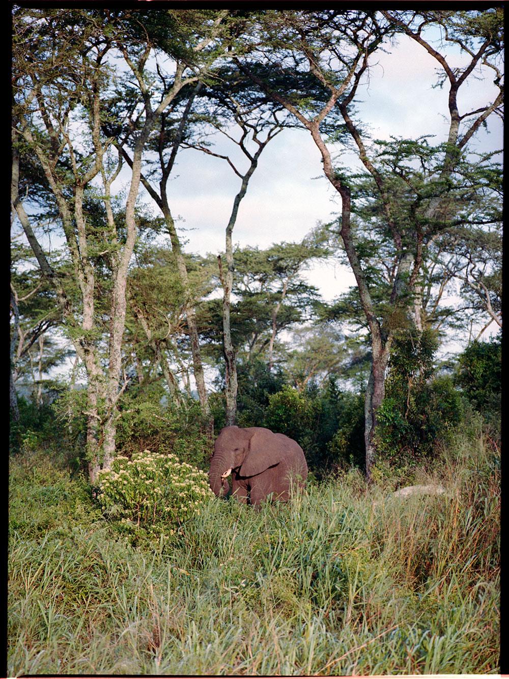 Uganda_MF_-(7).jpg